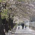 麻生川4月9日-02