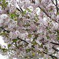 宮前区・平瀬川親水公園4月10日-02
