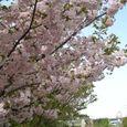宮前区・平瀬川親水公園4月15日-14