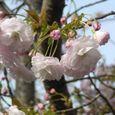 宮前区・平瀬川親水公園4月15日-13