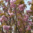 宮前区・平瀬川親水公園4月15日-05