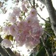 宮前区・平瀬川親水公園4月15日-07