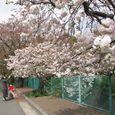 麻生川4月17日-04