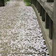 多摩区宿河原・二ヶ領用水4月13日-4