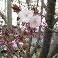 宮前区・平瀬川親水公園4月10日-05