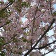 宮前区・平瀬川親水公園4月15日-06
