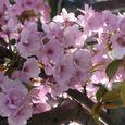 宮前区・平瀬川親水公園4月15日-04