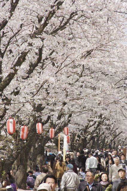 100403asaogawa02