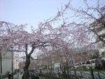 20110330mizonokuchi03