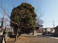 新城神社 桜20120326_01