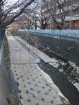 麻生川橋上流右岸4月2日
