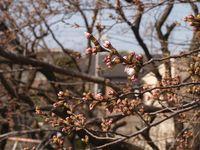 Sakura12.04.02-02