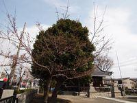 新城神社20120403_11r