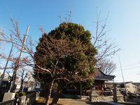 新城神社20120404_10r
