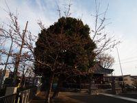 新城神社20120405_53r