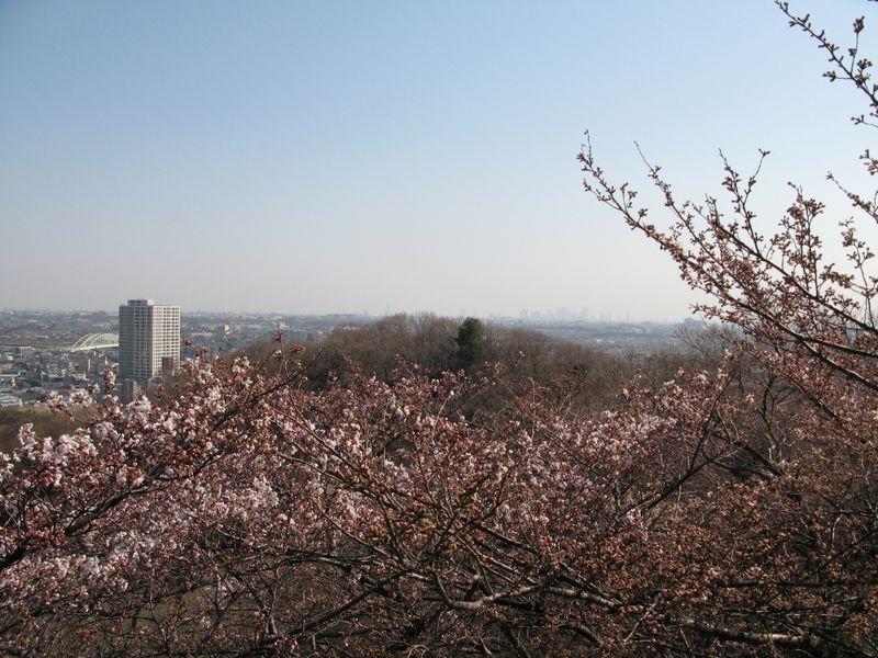 IMG_0025枡形山から新宿方面_1