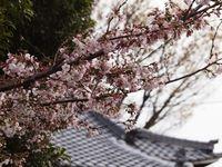 新城神社20120406_03r-1