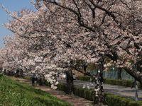 Sakura12.04.09-01