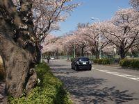 Sakura12.04.09-03