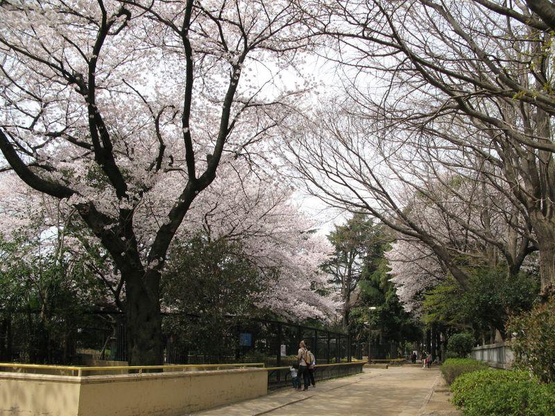 IMG_0077加瀬山・夢見ケ先公園・動物園_1