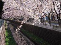 山口橋上流4月12日