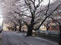 麻生川橋右岸上流通路4月12日