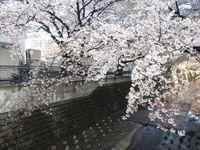 麻生川橋上流左岸4月12日