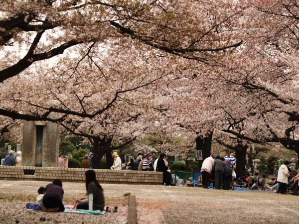桜20120413_54r