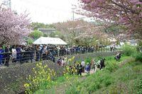 桜祭り03