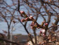 Sakura12.04.02-01