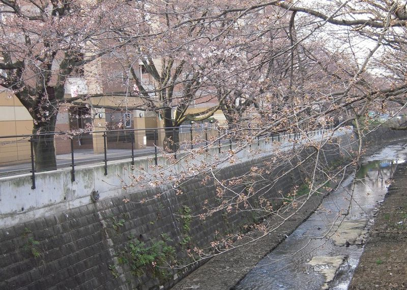 麻生川橋下流4月3日