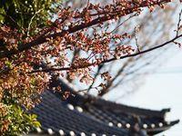 新城神社20120404_09r