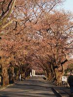 津田山20120404_95r