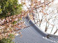 新城神社20120405_08r