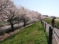 Sakura12.04.09-02