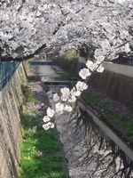 山口橋上流4月10日