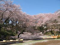 IMG_0006梶ヶ谷第一公園_1