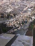 麻生川橋下流右岸4月13日