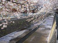 麻生川橋上流右岸 4月13日
