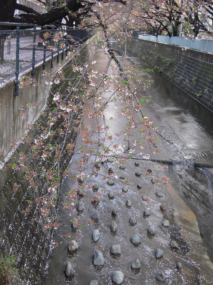 麻生川橋上流右岸4月15日