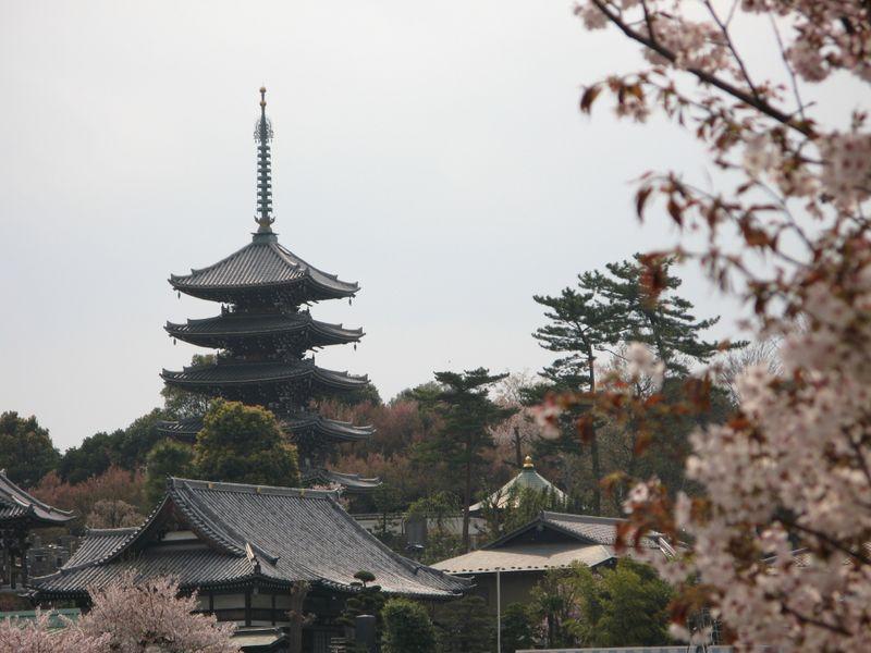 IMG_0041細山東公園からの香林寺_1