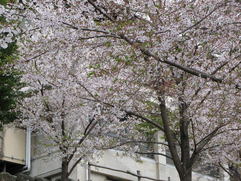 IMG_0053高石神社_1