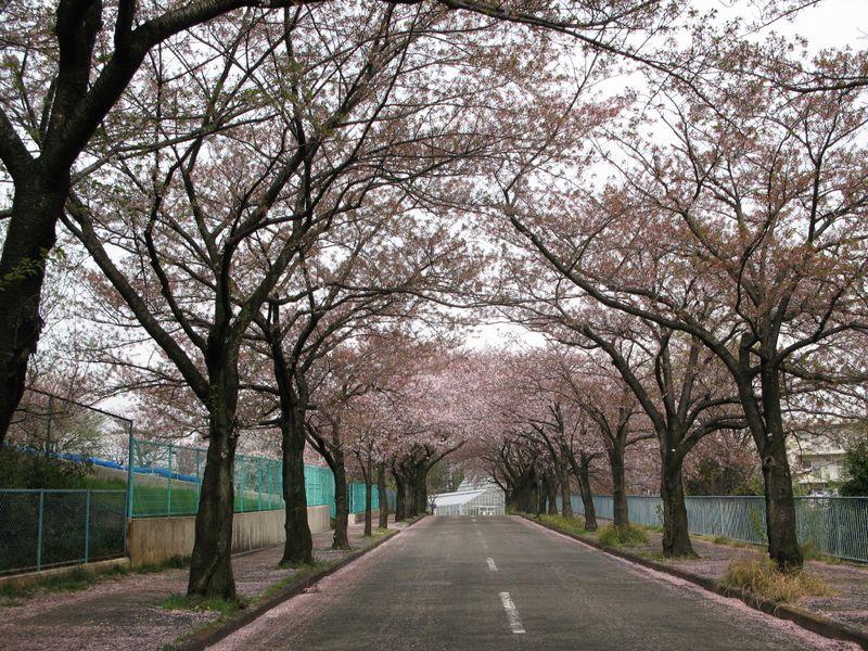 IMG_0024菅さくら公園_1