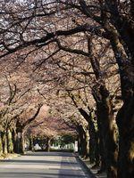 津田山20120404_86r