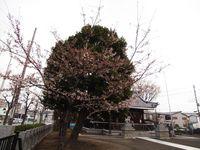 新城神社20120406_01r