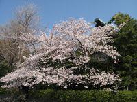 IMG_00021稲毛神社_1