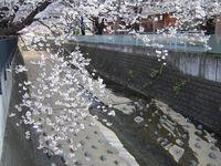 麻生川橋上流右岸4月9日