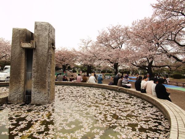 桜20120413_65r