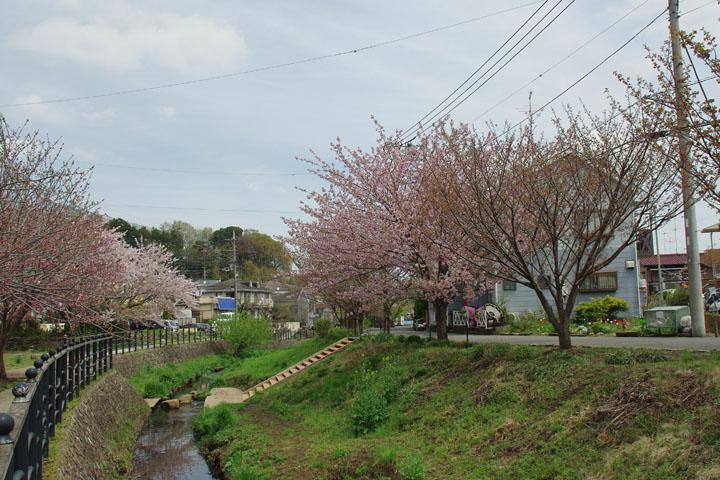 平瀬川041501