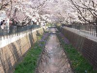 山口橋上流4月13日